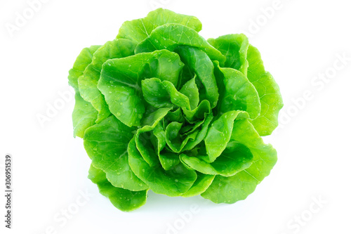 Obraz na płótnie green butter lettuce vegetable or salad isolated on white back ground with clipp