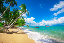 Beach And Coconut Palm Trees. ...