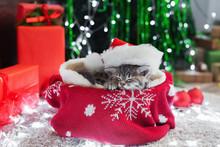Christmas Cat Wearing Santa Cl...