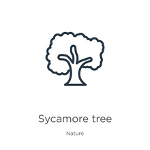 Sycamore Tree Icon. Thin Linear Sycamore Tree Outline Icon Isolated On White Background From Nature Collection. Line Vector Sycamore Tree Sign, Symbol For Web And Mobile