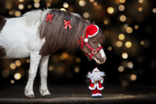 Pony Portrait In Santa Red Hat...