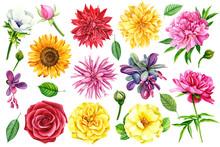 Set Of Flowers, Dahlia, Roses,...