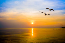 Pair Of Seagulls In Yellow, Orange, Blue Sky At Sunrise, Animal In Beautiful Nature Landscape For Background, Two Birds Flying Above The Sea, Water Or Ocean And Horizon At Sunset In Bang Pu, Thailand