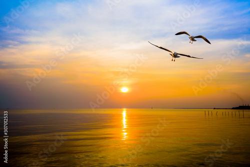 Pair of seagulls in yellow, orange, blue sky at sunrise, Animal in beautiful nat Canvas Print