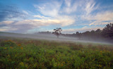 Fototapeta Nowy Jork - Upstate New York in Sullivan county in summer with fog on the meadow