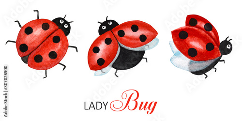 Fotografia, Obraz Watercolor ladybug set, flying bright cartoon insects