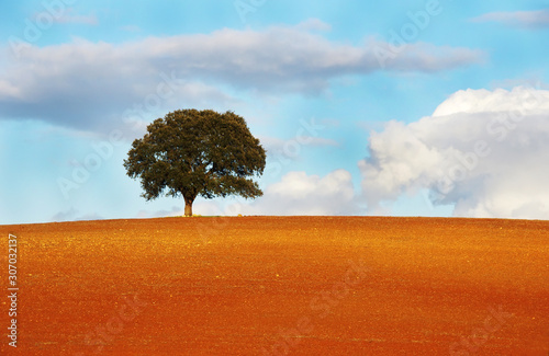 one tree in field of alentejo region Wallpaper Mural