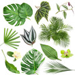 canvas print picture Set of green tropical leaves on white background