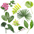 canvas print picture Set of green tropical leaves and flowers on white background