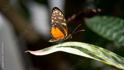 Sunbathing Butterfly(2)