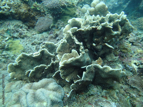 coral found at coral reef area at Tioman lsland