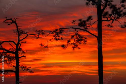Foto auf AluDibond Rot sky clouds with pine tree