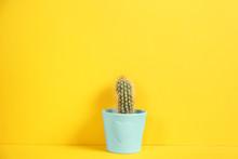 Beautiful Cactus On Yellow Bac...