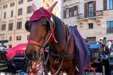 Horse For Entertainment And Riding Around The Center Of Rome