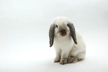 White Decorative Rabbit On A W...