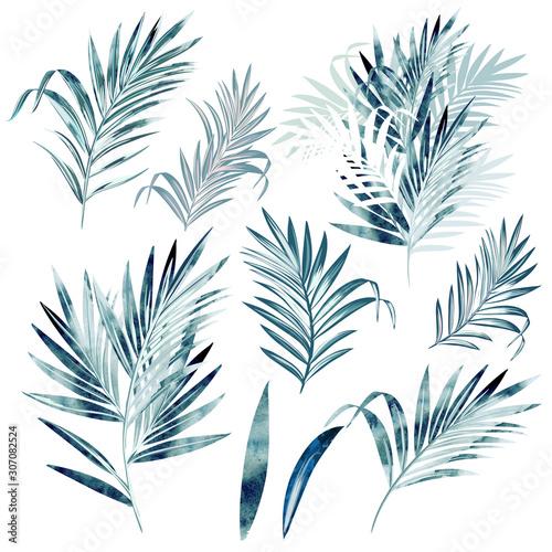 kolekcja-duzych-wektor-lisci-palmowych