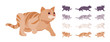White, black, orange, grey striped pedigree cat sneaking set. Active healthy kitten with beautiful fur, cute funny pet, home playful companion. Vector flat style cartoon illustration different views