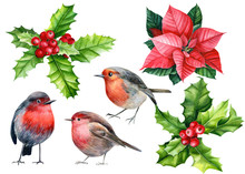 Set Of Elements, New Year And Christmas, Cute Bird Robin, Holly, Poinsettia, Watercolor Illustration On An Isolated White Background