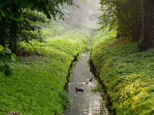 City Green Park Stream Wild Du...