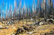 Yosemite Park, Szenen nach dem großen Waldbrand