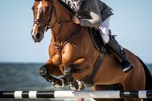 Horse Jumping, Equestrian Spor...