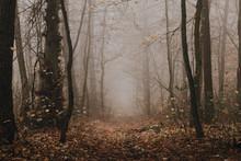 Mysterious Dark Foggy Autumn F...