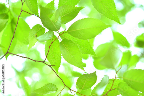 Garden Poster Spring 新緑 葉っぱ