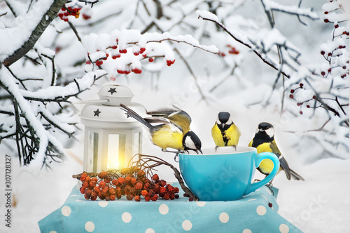 Fototapeta Winter still life. A flock of titmouse birds eat from a cup in a winter garden. Fabulous winter photo. In the background branches with red berries in the snow. obraz