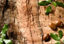 Holm Oak Leaves And Acorns On ...