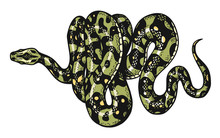 Snake In Vintage Style. Serpent Cobra Or Python Or Poisonous Viper. Engraved Hand Drawn Old Reptile Sketch For Tattoo. Anaconda For Sticker Or Logo Or T-shirts.