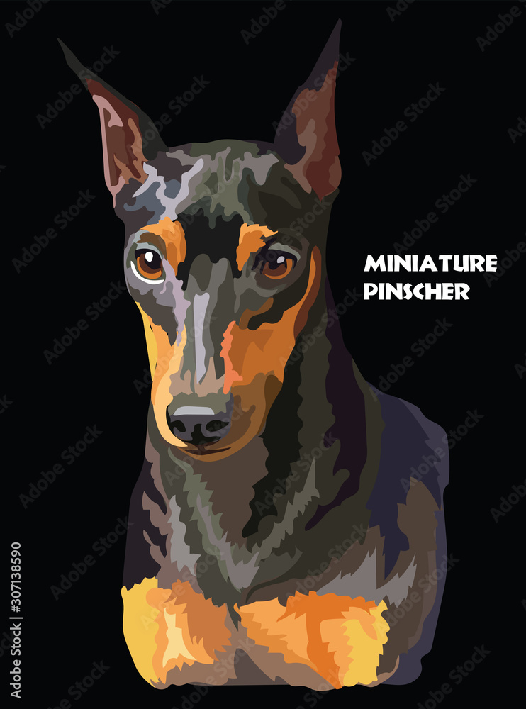 Fototapeta Miniature Pinscher colorful vector portrait