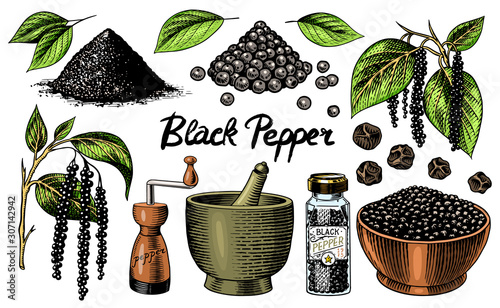 Black pepper set in Vintage style Canvas Print