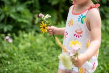 Kid Picking Flowers In Summer