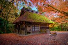 Autumn Of The Season Change In...
