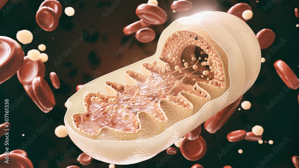 Fototapeta mitochondria cell in close-up - 3D Rendering