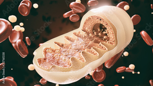 Fotomural mitochondria cell in close-up - 3D Rendering
