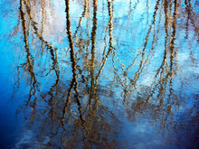Blue Sky And Winter Trees With Rippled Reflection