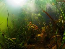 Underwater World. The Coastal ...