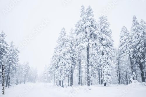 fototapeta na drzwi i meble Verschneite Tannenbäume im Winter