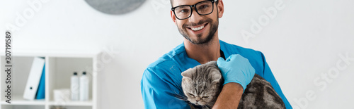 obraz lub plakat panoramic shot of handsome veterinarian smiling at camera while holding tabby scottish straight cat on hands
