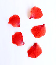 Petals Of Hibiscus Flower Or C...