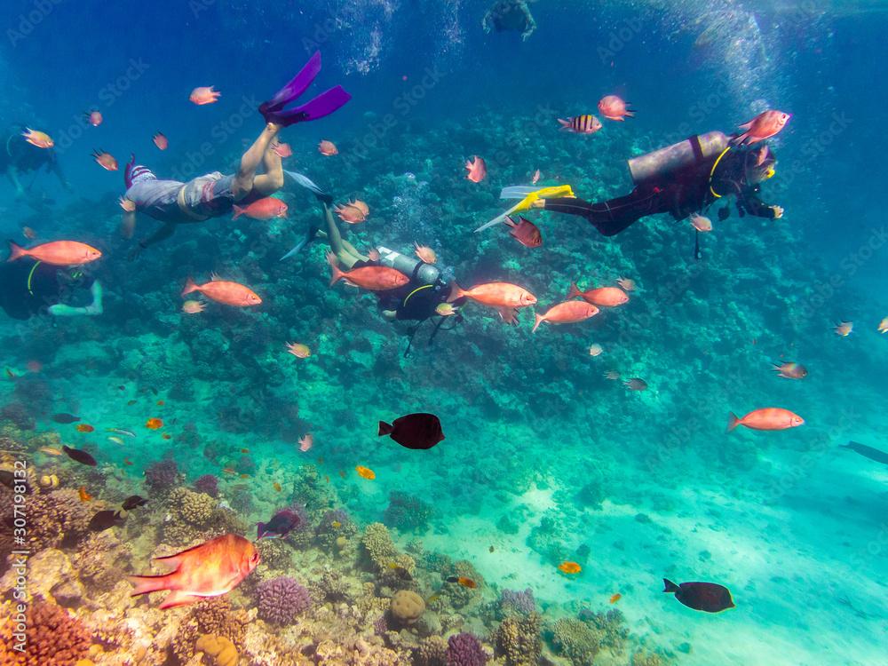 Fototapeta Scuba Diving explore the Red Sea, Egypt