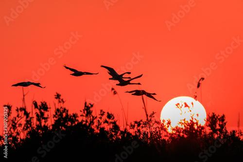 Foto auf AluDibond Rot Danube Delta, Romania
