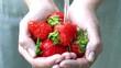 Hände mit frischen Erdbeeren waschen mit Wasser unter fließendem Wasser unter dem Wasserhahn