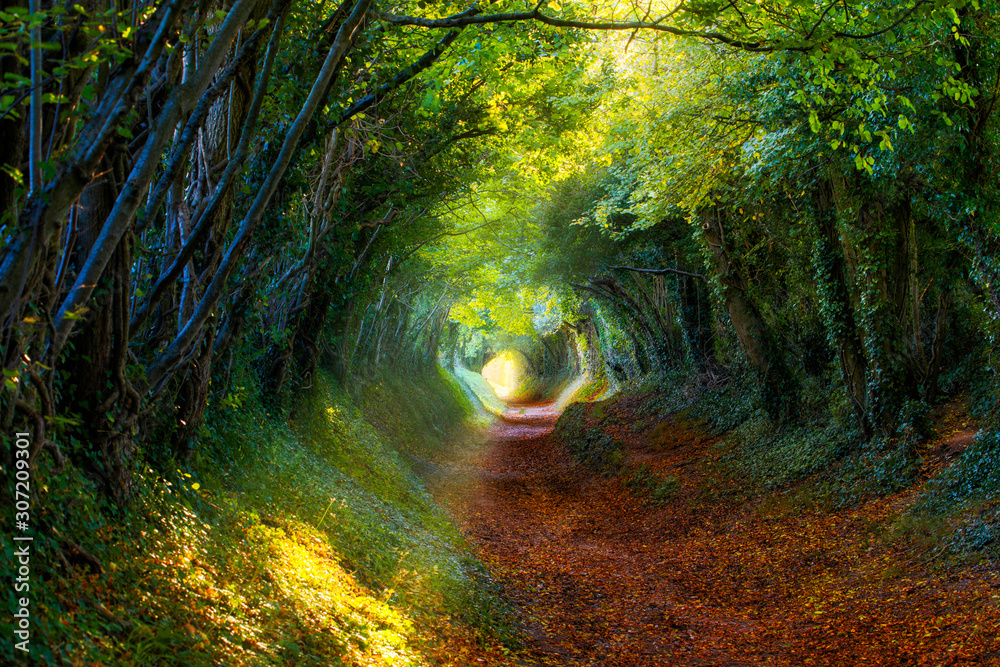 Fototapeta Into the Woods: Pathway through autumnal forest