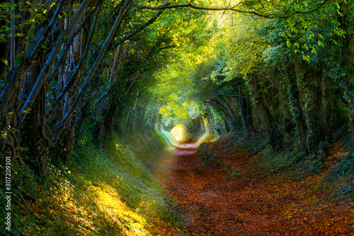 Fototapeta Into the Woods: Pathway through autumnal forest obraz