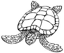 Vector Illustration Of Sea Tur...