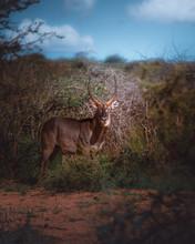 Brown Antelope Near Trees