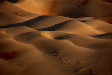 Closeup Photo Of Desert Digita...