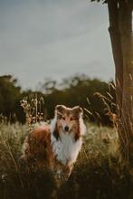 Dog Near Tree